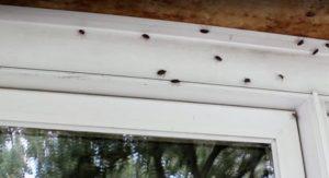 Ako sa efektívne zbaviť hmyzu, ktorý sa nám posledné týždne tlačí do domu?