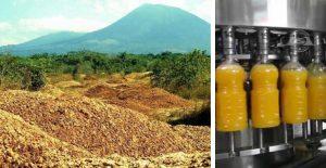 Na odlesnenú pôdu vyviezli tony odpadu z pomarančov a vrátili sa o 16 rokov. Príroda odviedla skvelú prácu